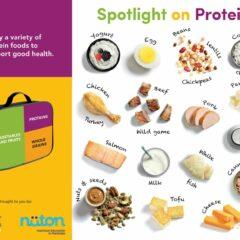Spotlight on Protein handout